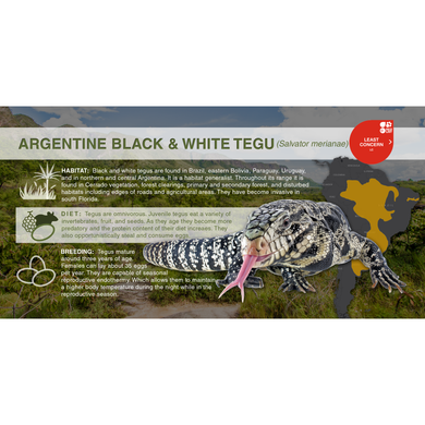 Argentine Black & White Tegu (Salvator merianae) - Aluminum Sign