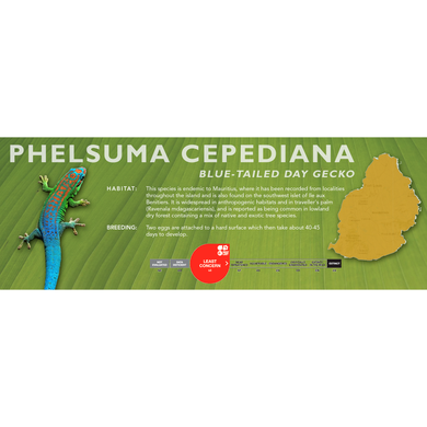 Blue-Tailed Day Gecko (Phelsuma cepediana) Standard Vivarium Label