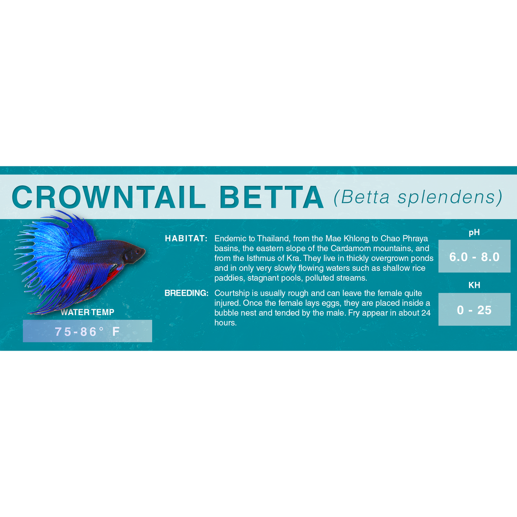 Betta Fish (Betta splendens) - Standard Aquarium Label
