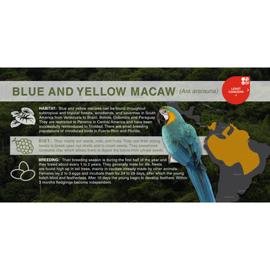 Blue and Yellow Macaw (Ara ararauna) - Aluminum Sign