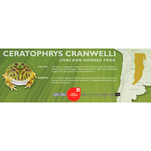 Load image into Gallery viewer, Chacoan Horned Frog (Ceratophrys cranwelli) - Standard Vivarium Label