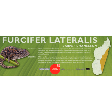 Carpet Chameleon (Furcifer lateralis) Standard Vivarium Label