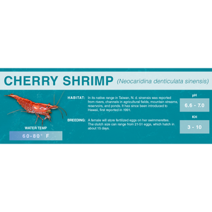 Cherry Shrimp (Neocaridina denticulata sinensis) - Standard Aquarium Label