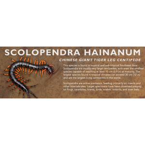 Scolopendra hainanum - Chinese Giant Tiger Leg Centipede Label