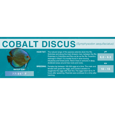 Blue or Brown Discus (Symphysodon aequifasciatus) - Standard Aquarium Label