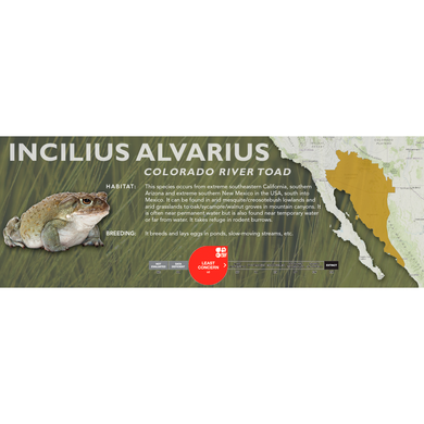 Colorado River Toad (Incilius alvarius) - Standard Vivarium Label