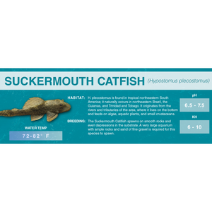 Suckermouth Catfish (Hypostomus plecostomus) - Standard Aquarium Label