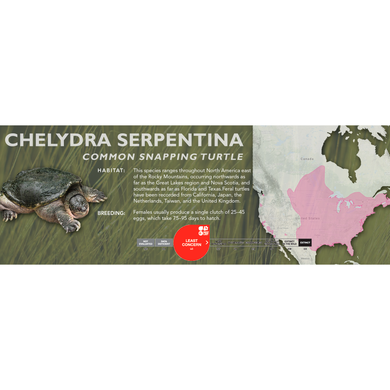 Common Snapping Turtle (Chelydra serpentina) - Standard Vivarium Label