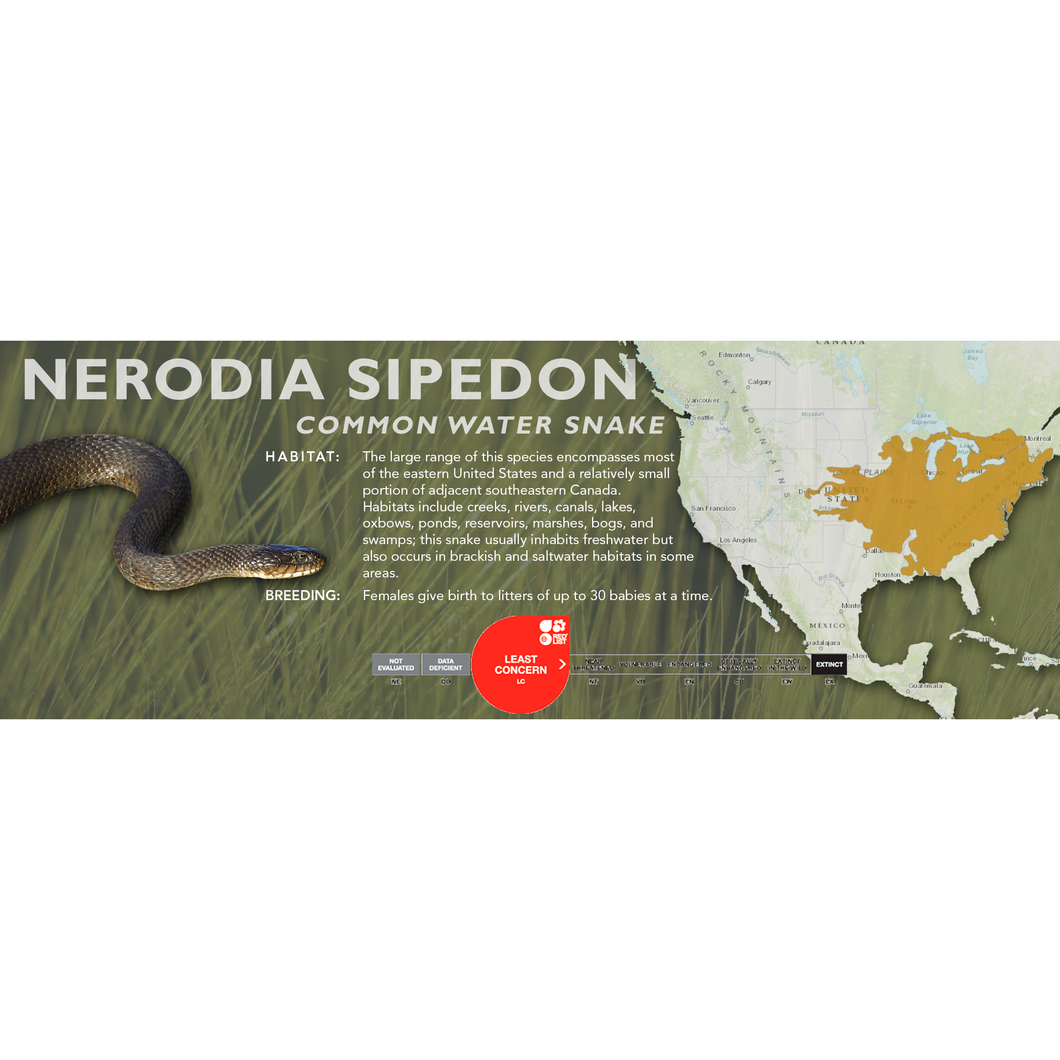 Common Water Snake (Nerodia sipedon) Standard Vivarium Label