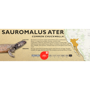 Common Chuckwalla (Sauromalus ater) Standard Vivarium Label