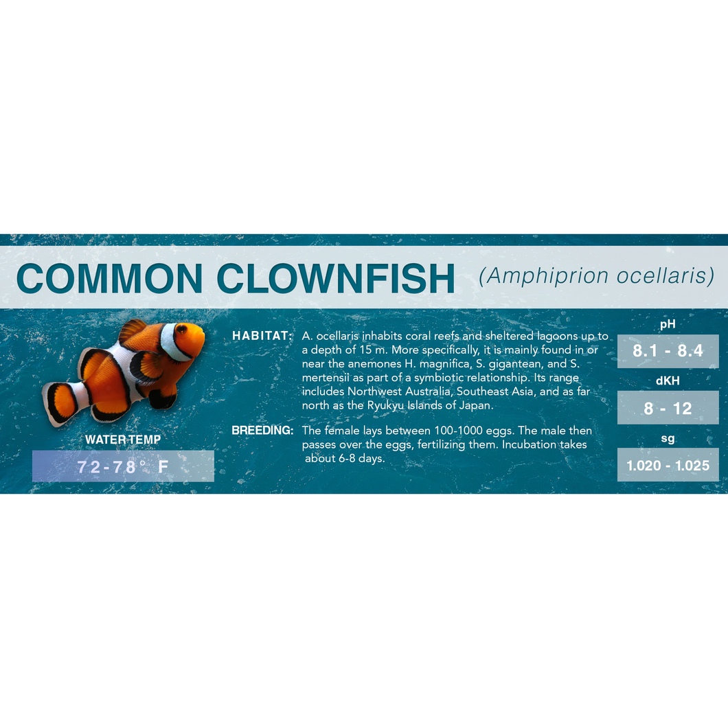 Common Clownfish (Amphiprion ocellaris) - Standard Aquarium Label