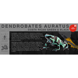 "Dendrobates auratus ""Costa Rican Green & Black"" - Black Series Vivarium Label"