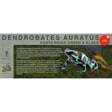"Load image into Gallery viewer, Dendrobates auratus ""Costa Rican Green & Black"" - Black Series Vivarium Label"