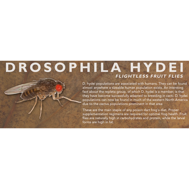 Drosophila hydei (Flightless Fruit Flies) - Feeder Label