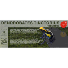 "Load image into Gallery viewer, Dendrobates tinctorius ""Robertus"" - Black Series Vivarium Label"