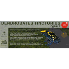 "Load image into Gallery viewer, Dendrobates tinctorius ""Cobalt"" - Black Series Vivarium Label"