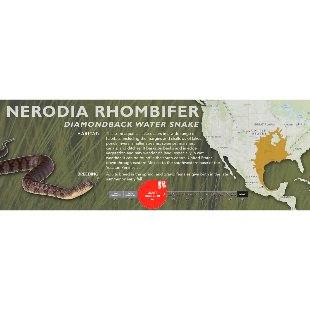 Diamondback Water Snake (Nerodia rhombifer) Standard Vivarium Label