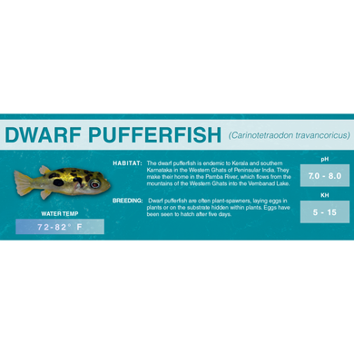 Dwarf Pufferfish (Carinotetraodon travancoricus) - Standard Aquarium Label