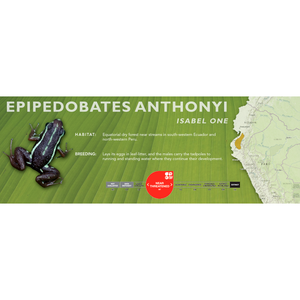 Epipedobates anthonyi - Standard Vivarium Label