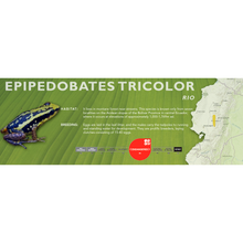 Load image into Gallery viewer, Epipedobates tricolor - Standard Vivarium Label
