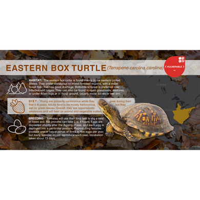 Eastern Box Turtle (Terrapene carolina carolina) - Aluminum Sign