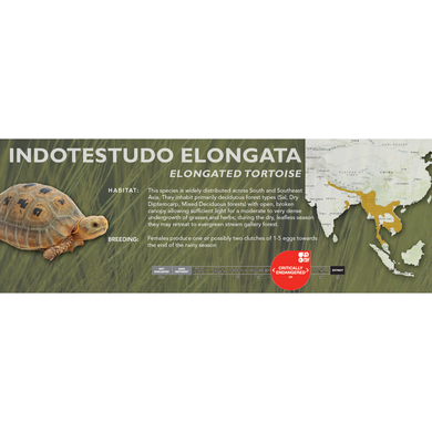 Elongated Tortoise (Indotestudo elongata) - Standard Vivarium Label