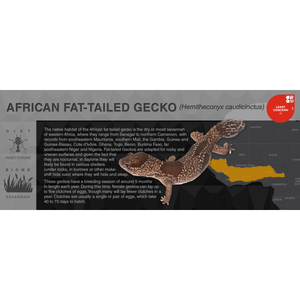 African Fat-Tailed Gecko (Hemitheconyx caudicinctus) - Black Series Vivarium Label