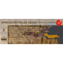 Load image into Gallery viewer, African Fat-Tailed Gecko (Hemitheconyx caudicinctus) - Black Series Vivarium Label