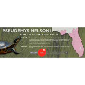Florida Red-Bellied Cooter (Pseudemys nelsoni) - Standard Vivarium Label
