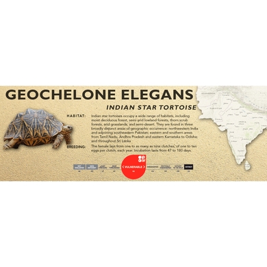 Indian Star Tortoise (Geochelone elegans) - Standard Vivarium Label
