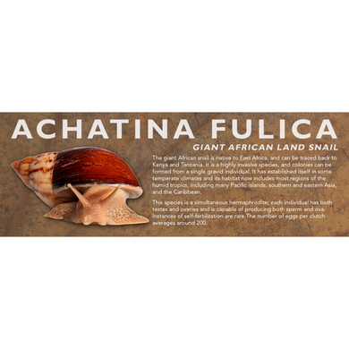 Achatina fulica - Giant African Land Snail Label