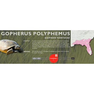 Gopher Tortoise (Gopherus polyphemus) - Standard Vivarium Label