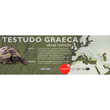 Load image into Gallery viewer, Greek Tortoise (Testudo graeca) - Standard Vivarium Label