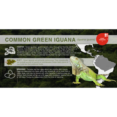 Common Green Iguana (Iguana iguana) - Aluminum Sign