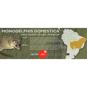 Grey Short-Tailed Opossum (Monodelphis domestica) - Standard Vivarium Label