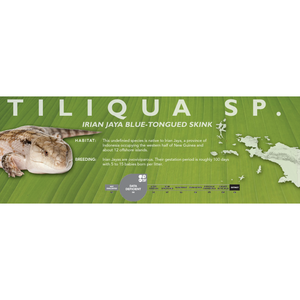 Irian Jaya Blue-Tongued Skink (Tiliqua sp.) Standard Vivarium Label
