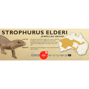 Jewelled Gecko (Strophurus elderi) Standard Vivarium Label