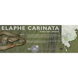 King Rat Snake (Elaphe carinata) Standard Vivarium Label