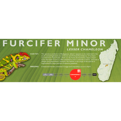 Lesser Chameleon (Furcifer minor) Standard Vivarium Label