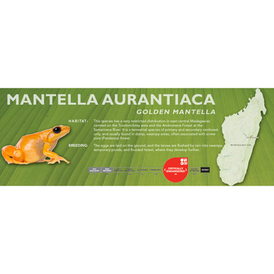 Mantella aurantiaca (Golden Mantella) - Standard Vivarium Label