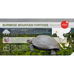 Burmese Mountain Tortoise (Manouria emys) - Aluminum Sign