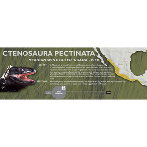 Mexican Spiny-Tailed Iguana (Ctenosaura pectinata) Standard Vivarium Label