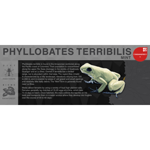 "Load image into Gallery viewer, Phyllobates terribilis ""Mint"" - Black Series Vivarium Label"
