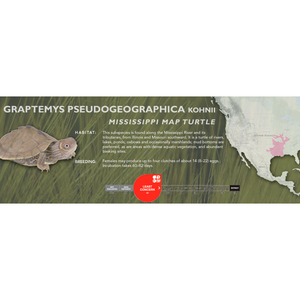 Mississippi Map Turtle (Graptemys pseudogeographica kohnii) - Standard Vivarium Label