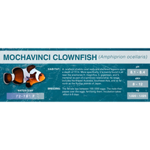 Load image into Gallery viewer, Common Clownfish (Amphiprion ocellaris) - Standard Aquarium Label