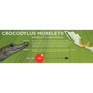 Morelet's Crocodile (Crocodylus moreletii) - Standard Vivarium Label