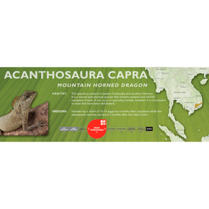Mountain Horned Lizard (Acanthosaura capra) Standard Vivarium Label
