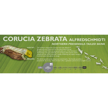 Load image into Gallery viewer, Prehensile-Tailed Skink (Corucia zebrata) Standard Vivarium Label