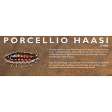Load image into Gallery viewer, Porcellio haasi - Isopod Label
