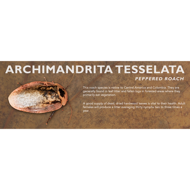 Archimandrita tesselata (Peppered Roach) - Roach Label